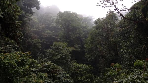 monteverde2