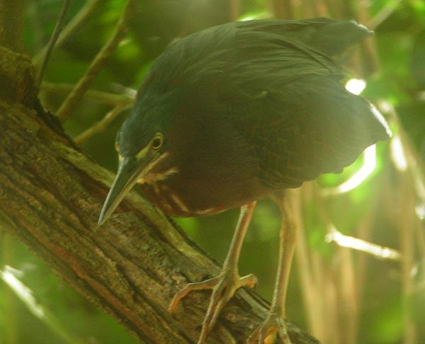 bird-manuel-antonio.jpg