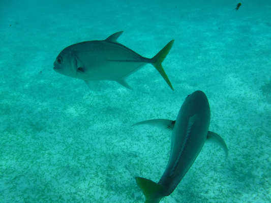 Hol-Chan-Marine-Reserve10