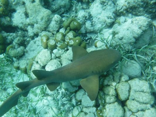 Hol-Chan-Marine-Reserve11
