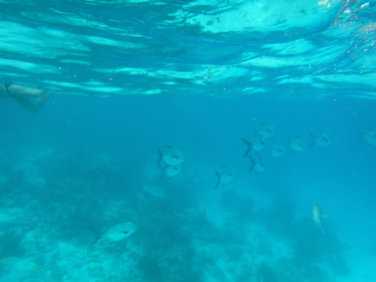 Hol-Chan-Marine-Reserve15