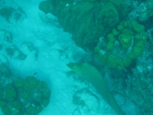 Hol-Chan-Marine-Reserve16