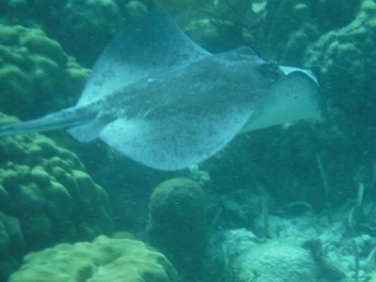 Hol-Chan-Marine-Reserve18