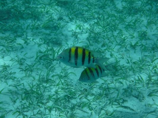 Hol-Chan-Marine-Reserve5