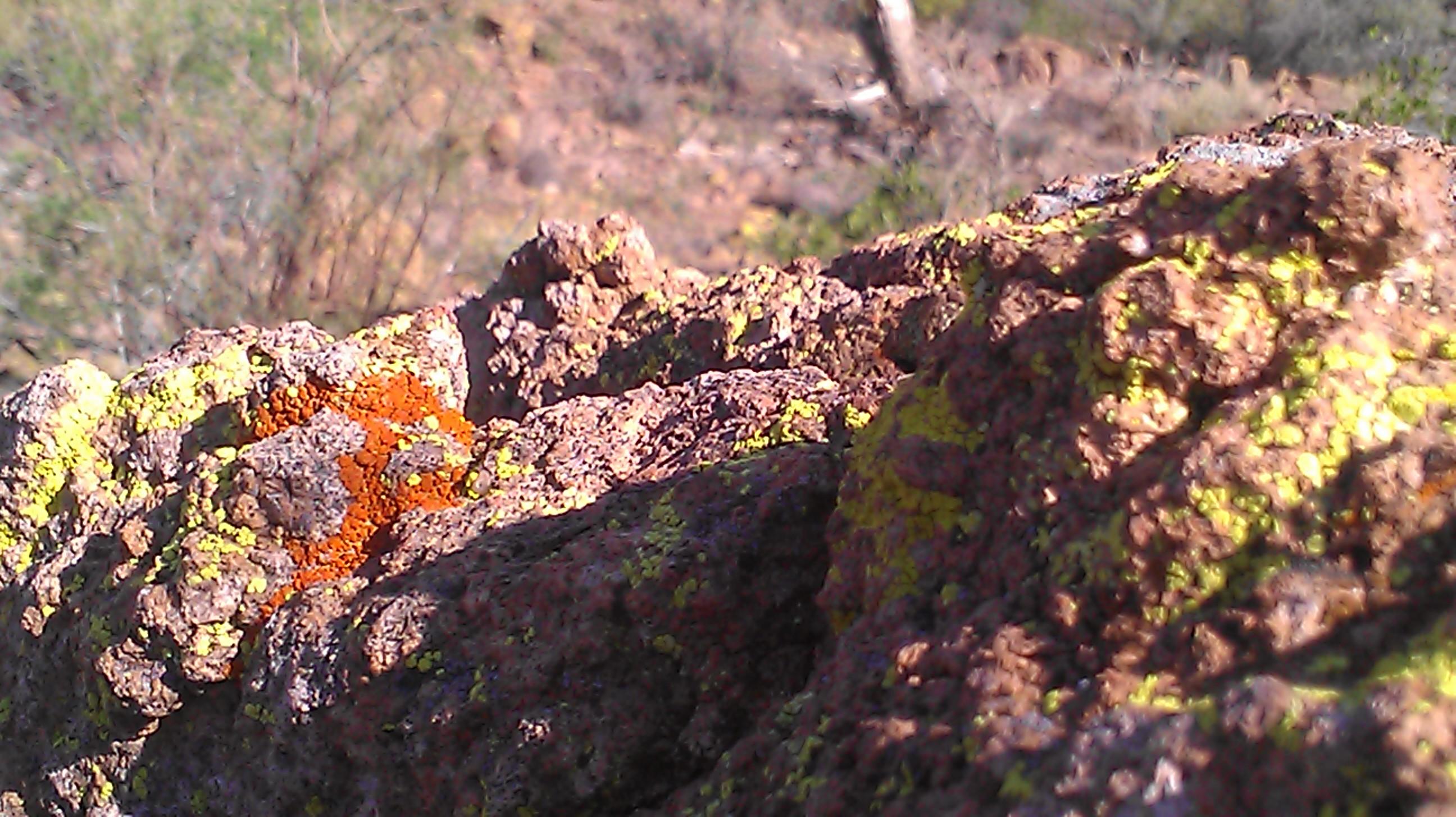 Desert Moss